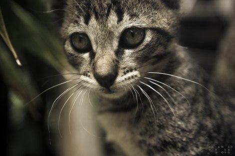 Cat_2 fszp